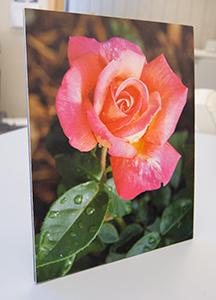 Color Print Mounted on Foam Board