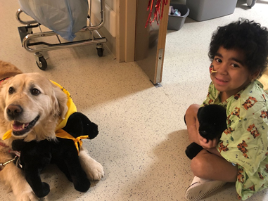 Canines-N-Kids' Project Hearts & Tails Debuts at Boston Children's Hospital Care Packages Bring Hope to Kids and Dogs with Cancer Nationwide