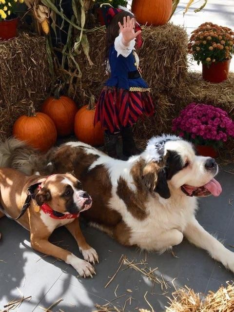 Howl-O-Ween Parade & Trick or Treat