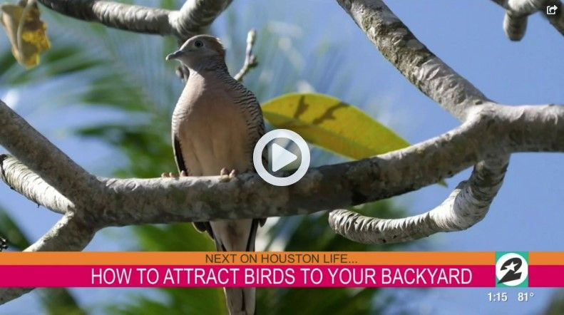 How You Can Attract Birds To Your Backyard
