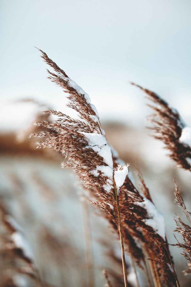 2020 Keep Oklahoma Beautiful Winter Workshop