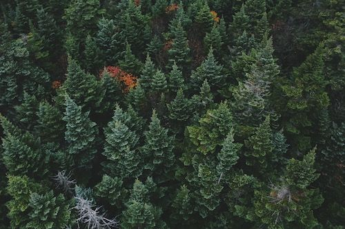 Evergreen Content: What it Is and How to Use it