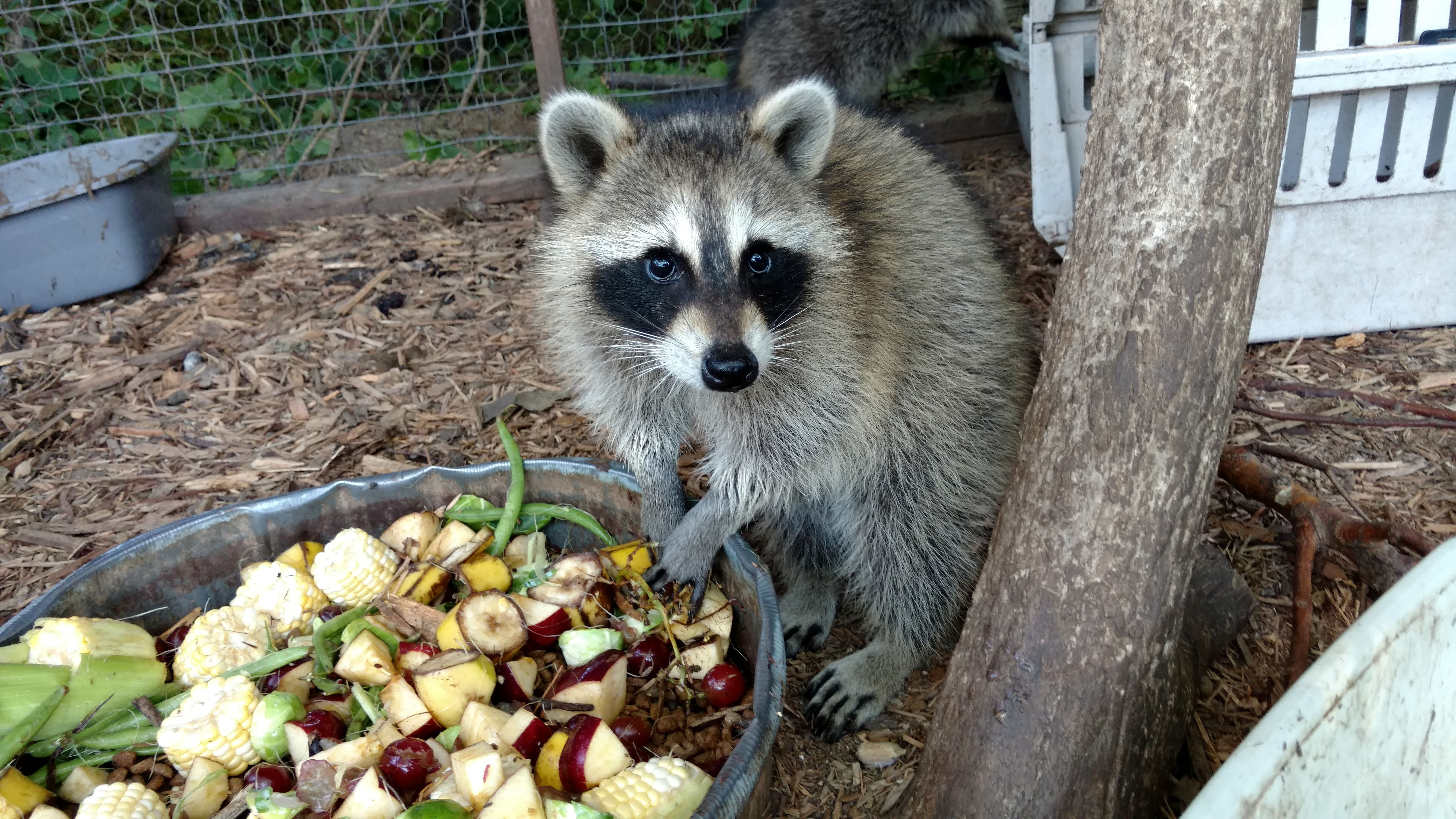 Join Us For Wildlife Wednesdays!