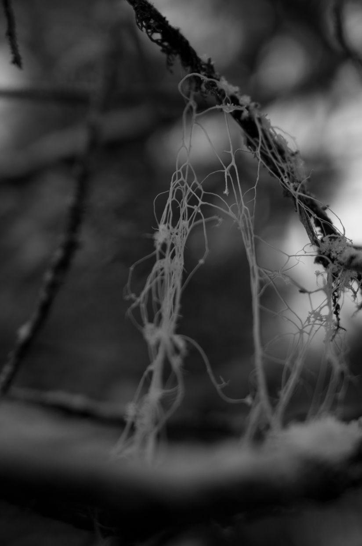 Whitman 14, Lichen