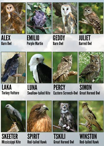 Adoption birds
