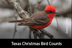 Texas Christmas Bird Counts