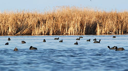 """What are some of the best types of """"confidence"""" decoys?"""