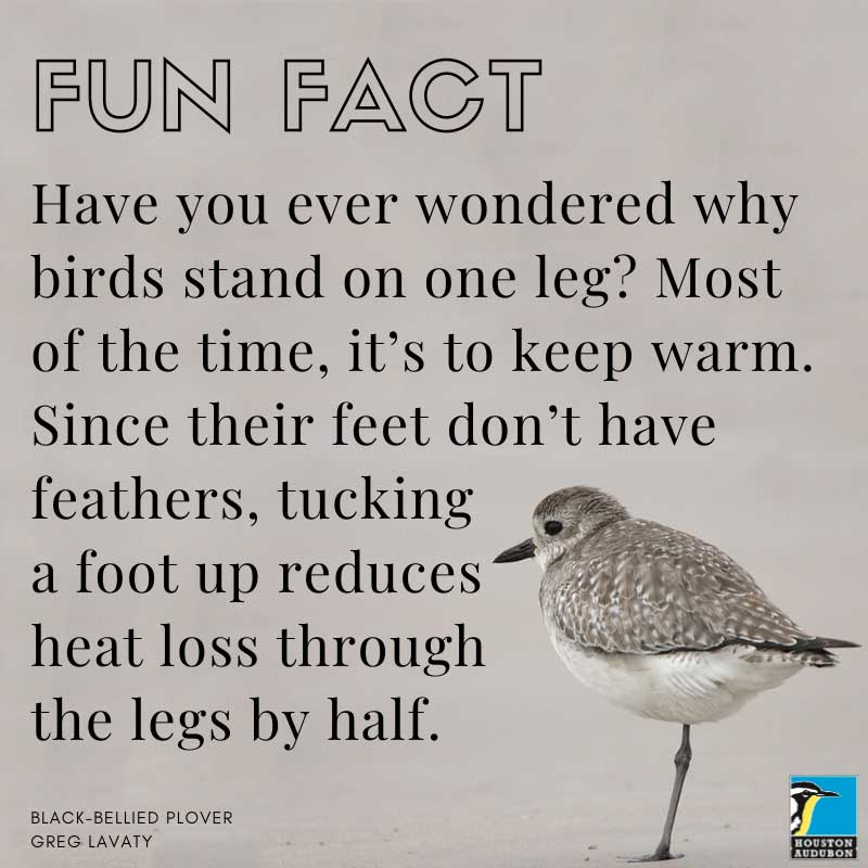 Fun fact about standing on one leg