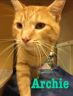 Archie adopted 031718