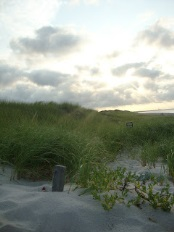 This is a picture of the beach with grass coming out of the sand