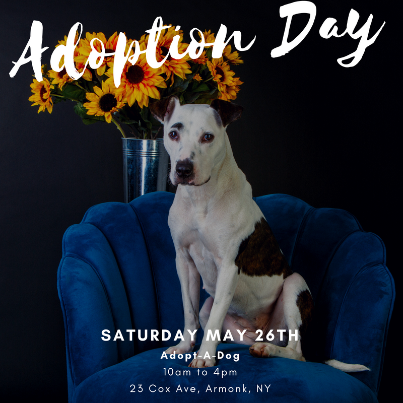 Memorial Day Weekend Adoption Event