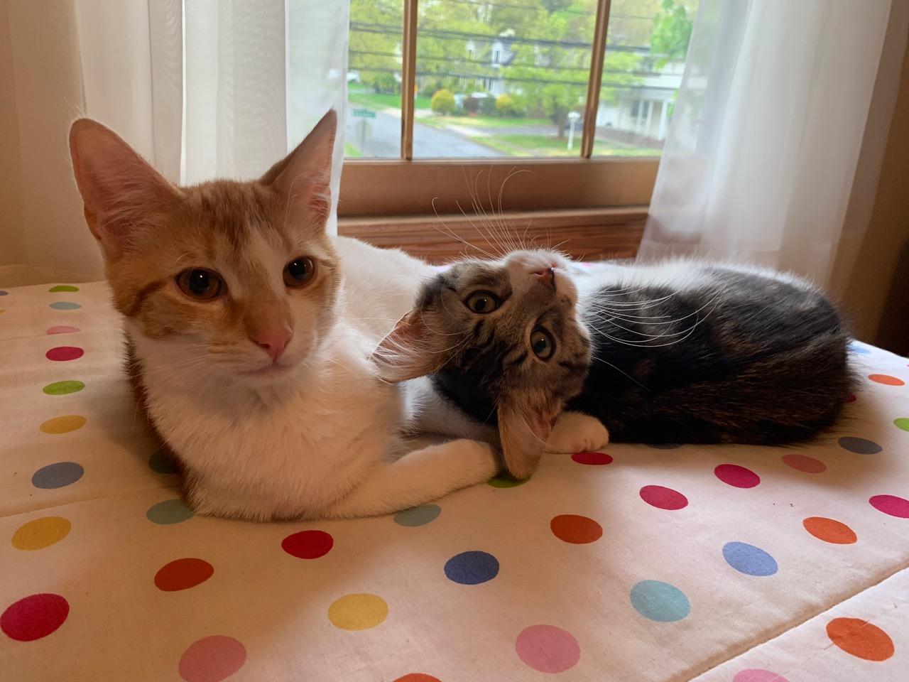 Skye & Buddy (aka Tigger)