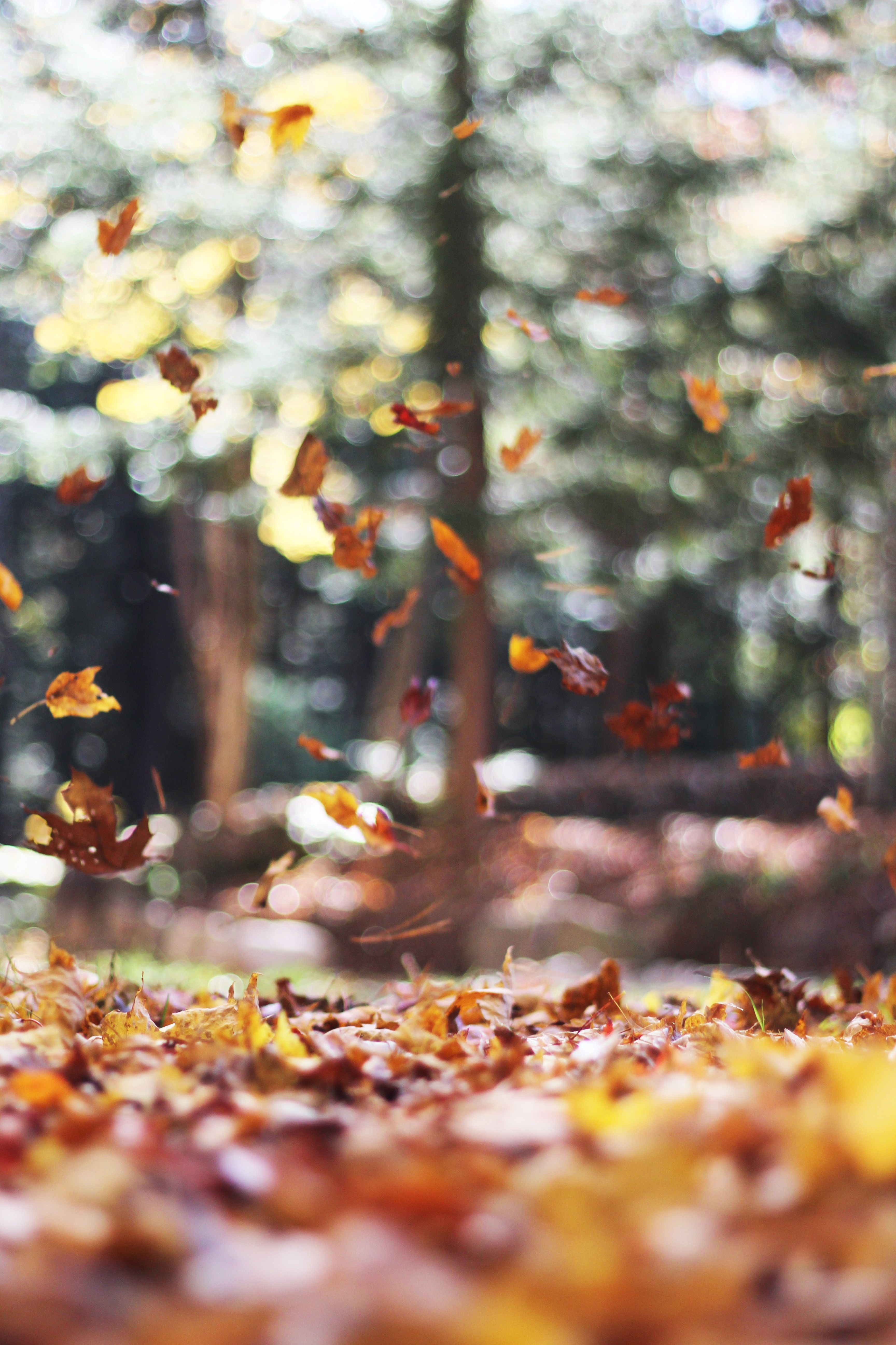 Acts of Kindness You Can Do This Fall