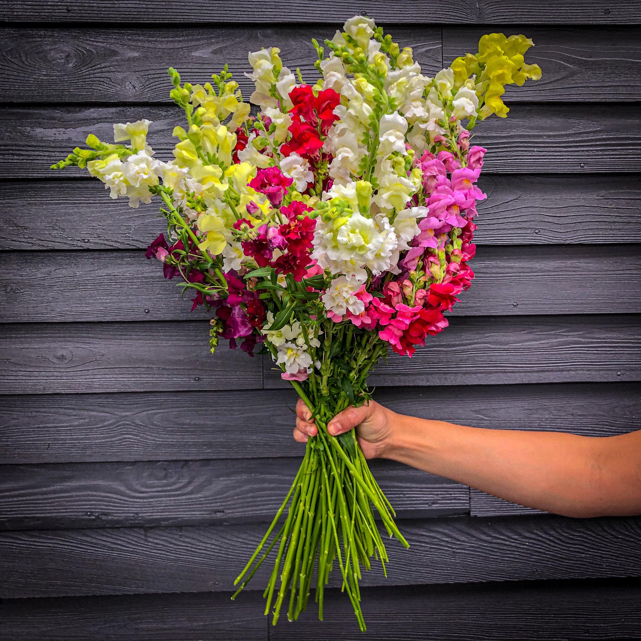 Mixed bouquet share (HALF)