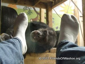 Loulis tickles a caregiver's feet through the glass