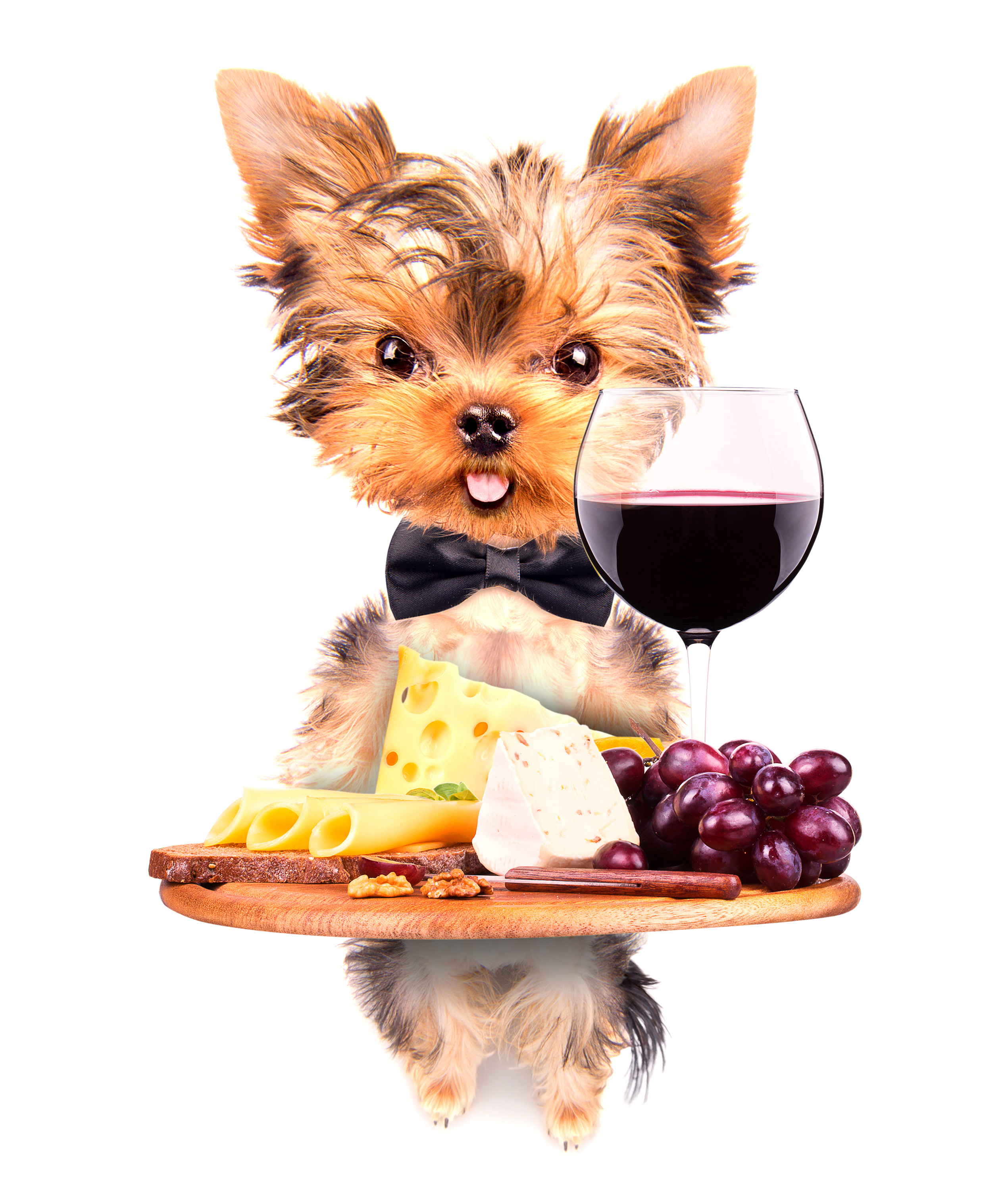 Wine, Kibbles and Bids