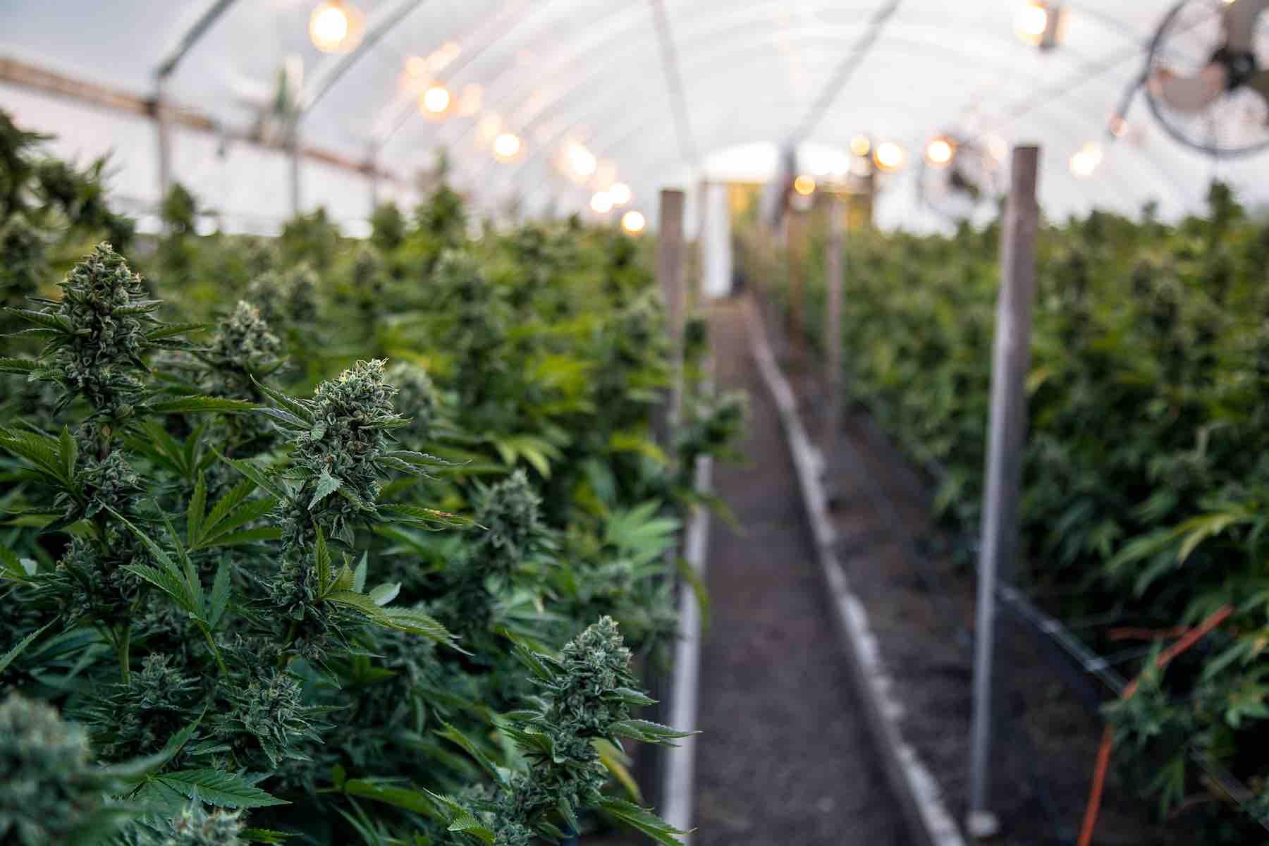 Cannabis Reform & Regulation