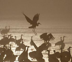 500,000 cranes