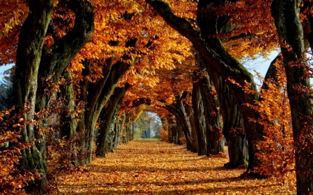 Tales Told in Autumn
