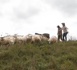 Farm Programs