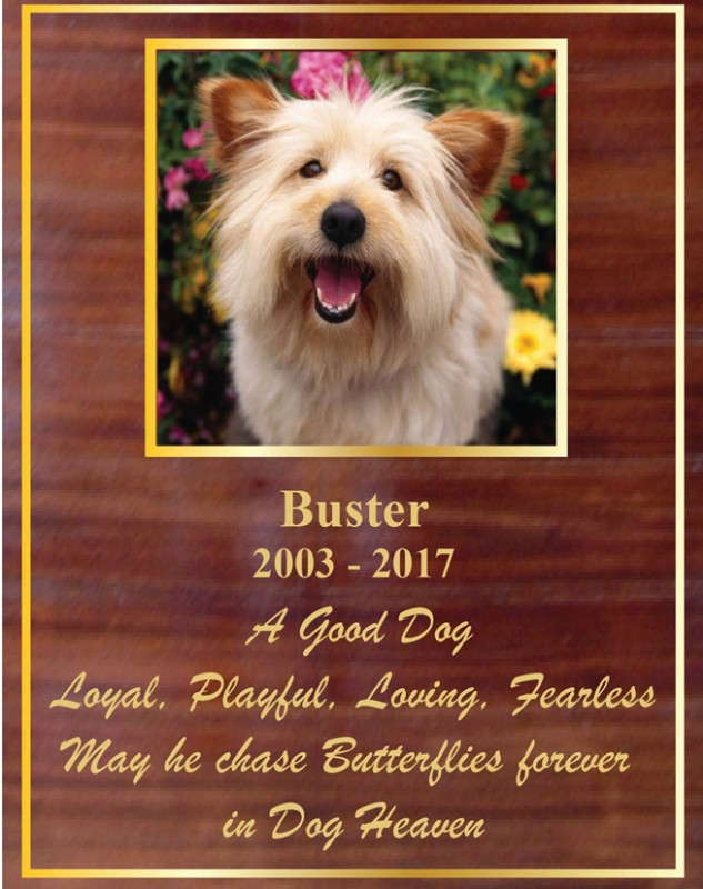 GC15695 - Carved Mahogany Memorial Wall Plaque for  Buster, Beloved Dog, with Photo
