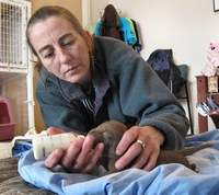 Rescue groups' success shows promise for pound