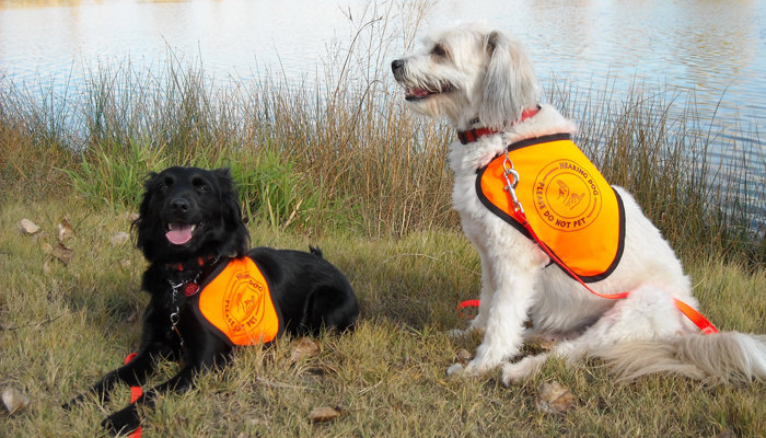 Security Guards Smile at Hearing Dog