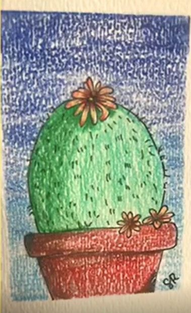 How to Sketch a Cactus