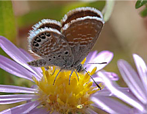 Butterfly Survey