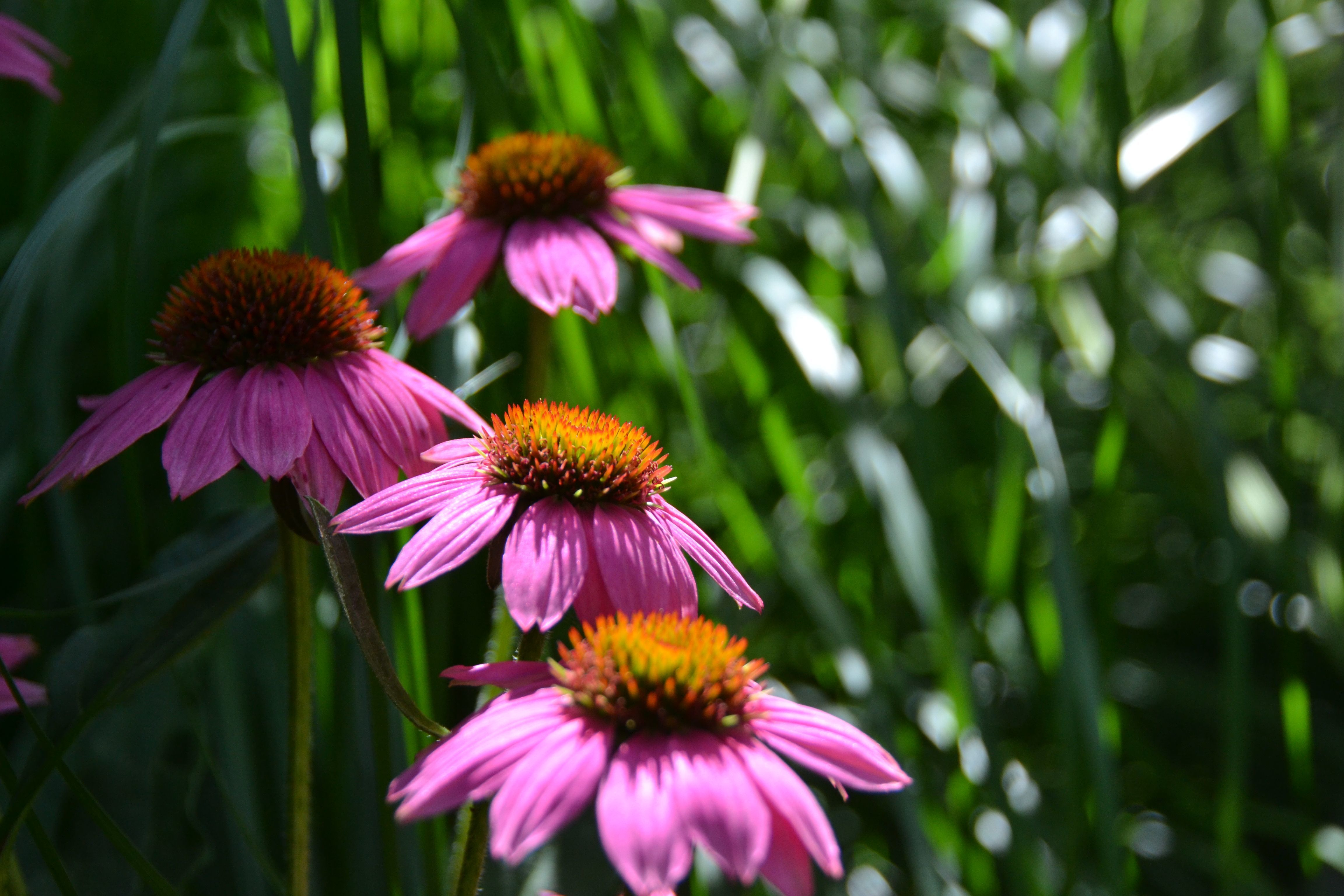 Native Plant Month