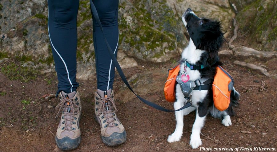 Pups on the Prowl (POP) Hikes