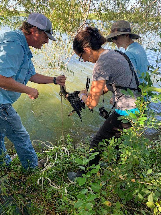 Anhinga Rescue at Fiorenza Park Bird Survey