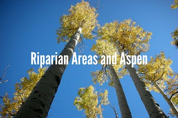 Riparian Areas and Aspen