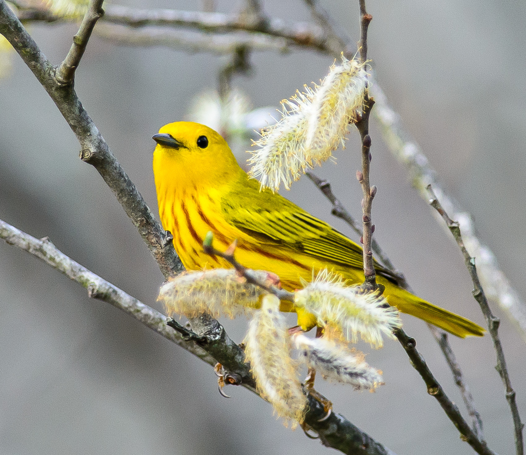 Audubon Society of Rhode Island Birds Birdwatching Non-profit Environmental Protection