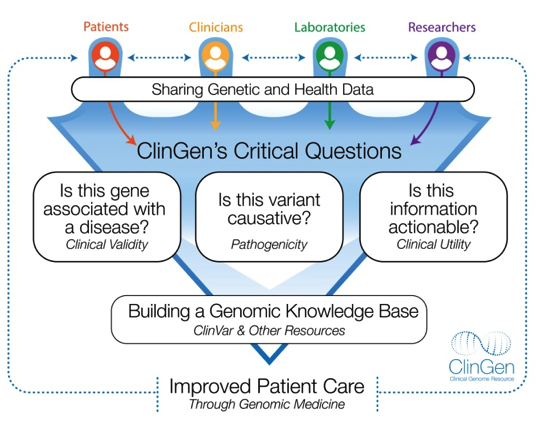 Infographic: Flowchart text from top to bottom: Patients, Clinicians, Laboratories, Researchers with connecting arrows between each group. Sharing Genetic and Health Data. ClinGen's Critical Questions: Is this gene associated with a disease? (Clinical Val