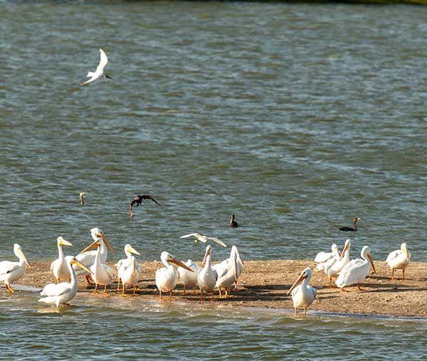 Birds Aplenty at November Fiorenza Bird Survey
