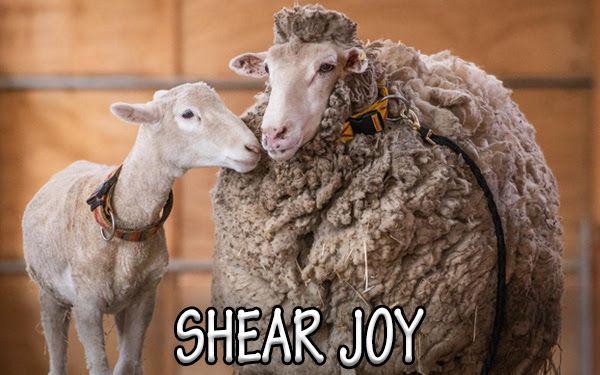Virtual Sheep Shearing