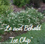 Lo and Behold Ice chip