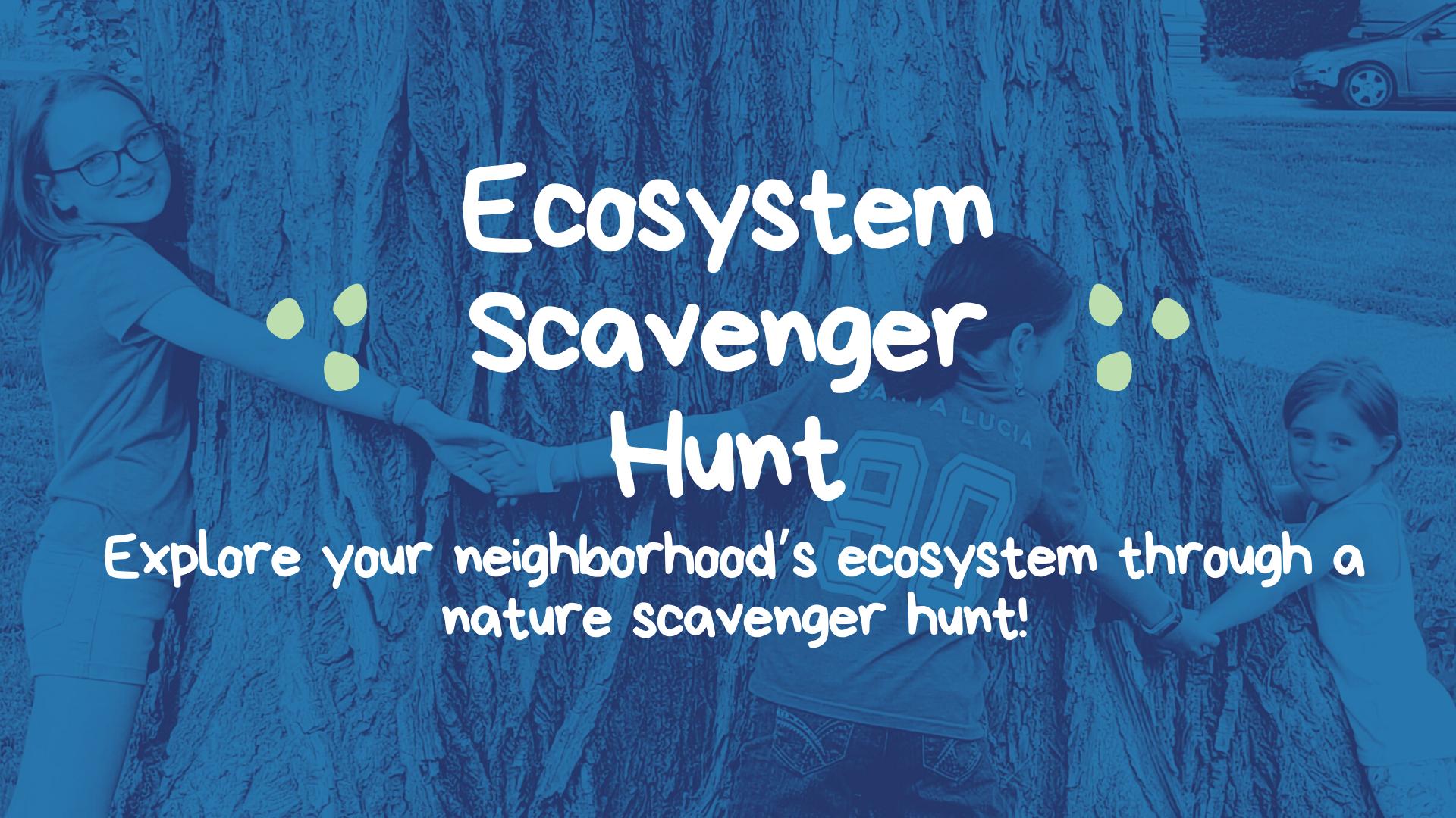 Ecosystem Scavenger Hunt