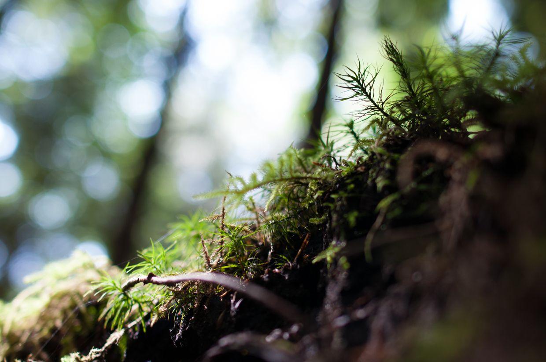 Rainbird 10, Moss from Below