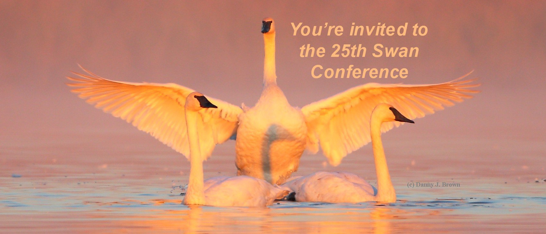 25th Swan Conference