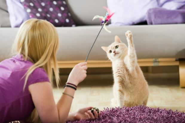 A Guide To Supporting Your Cats Natural Instincts