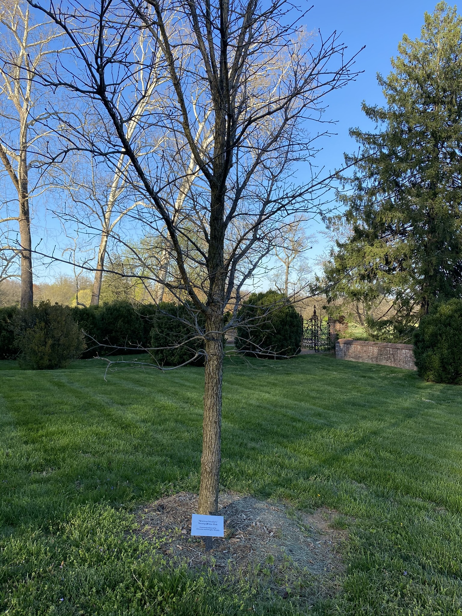 Speak for the trees! This $50 donation provides helpful tree identification markers so that Park guests can learn the difference between an Ash and an Elm tree.