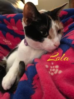 Lola 41419