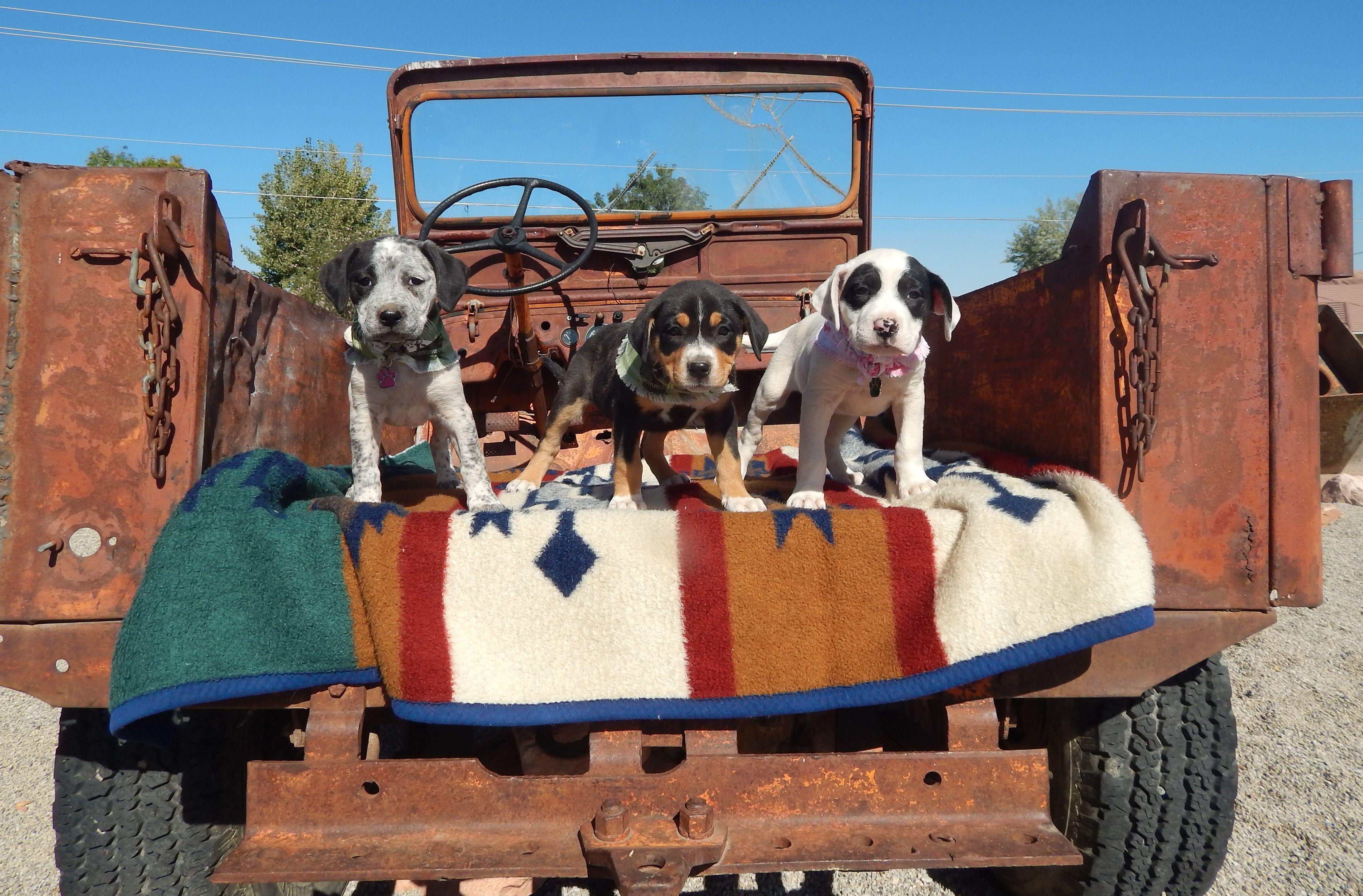 2022 Jeep Safari Pet Photo Contest