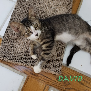 David adopted 12019