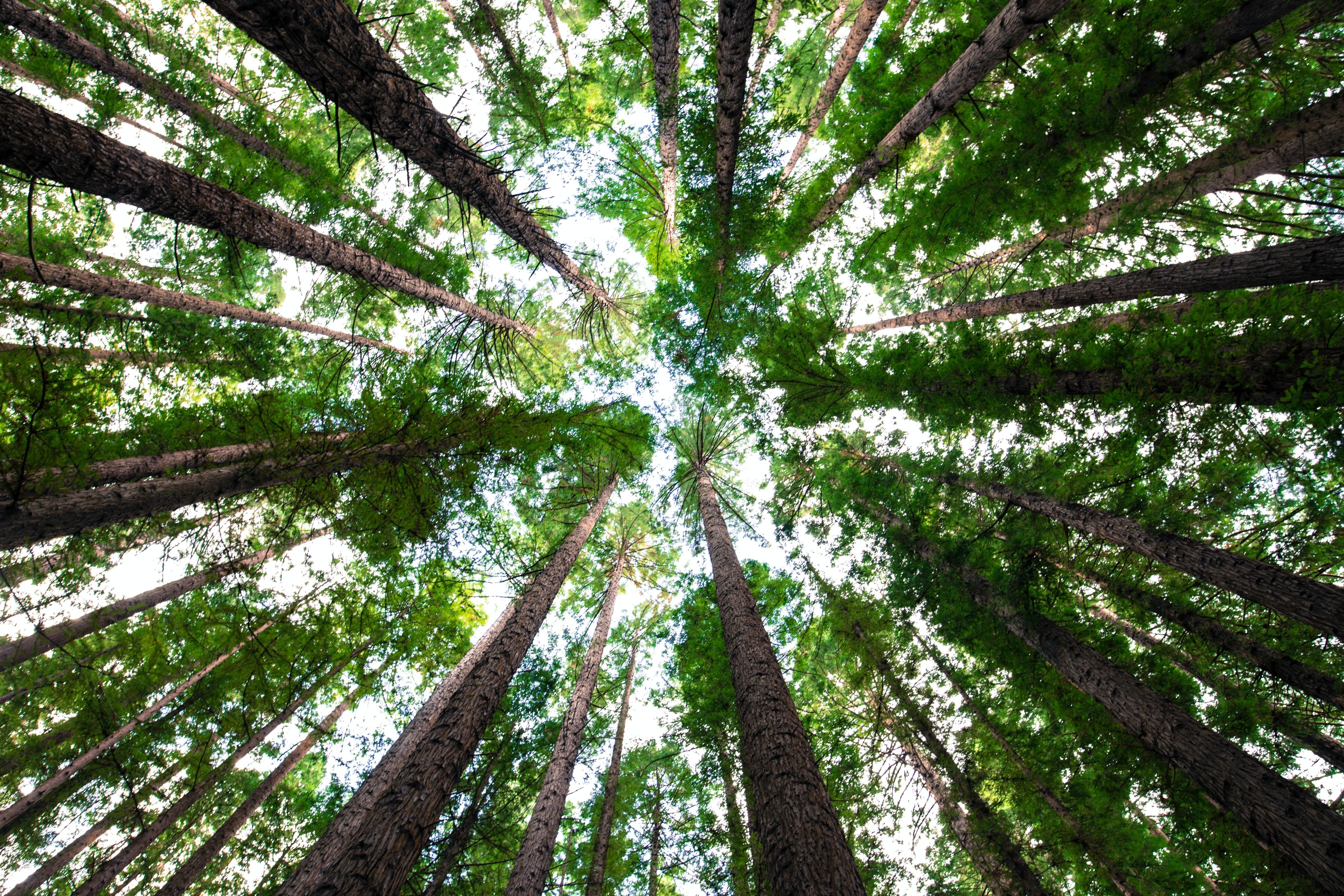 EEN Applauds Bipartisan Trillion Trees and Natural Carbon Storage Act