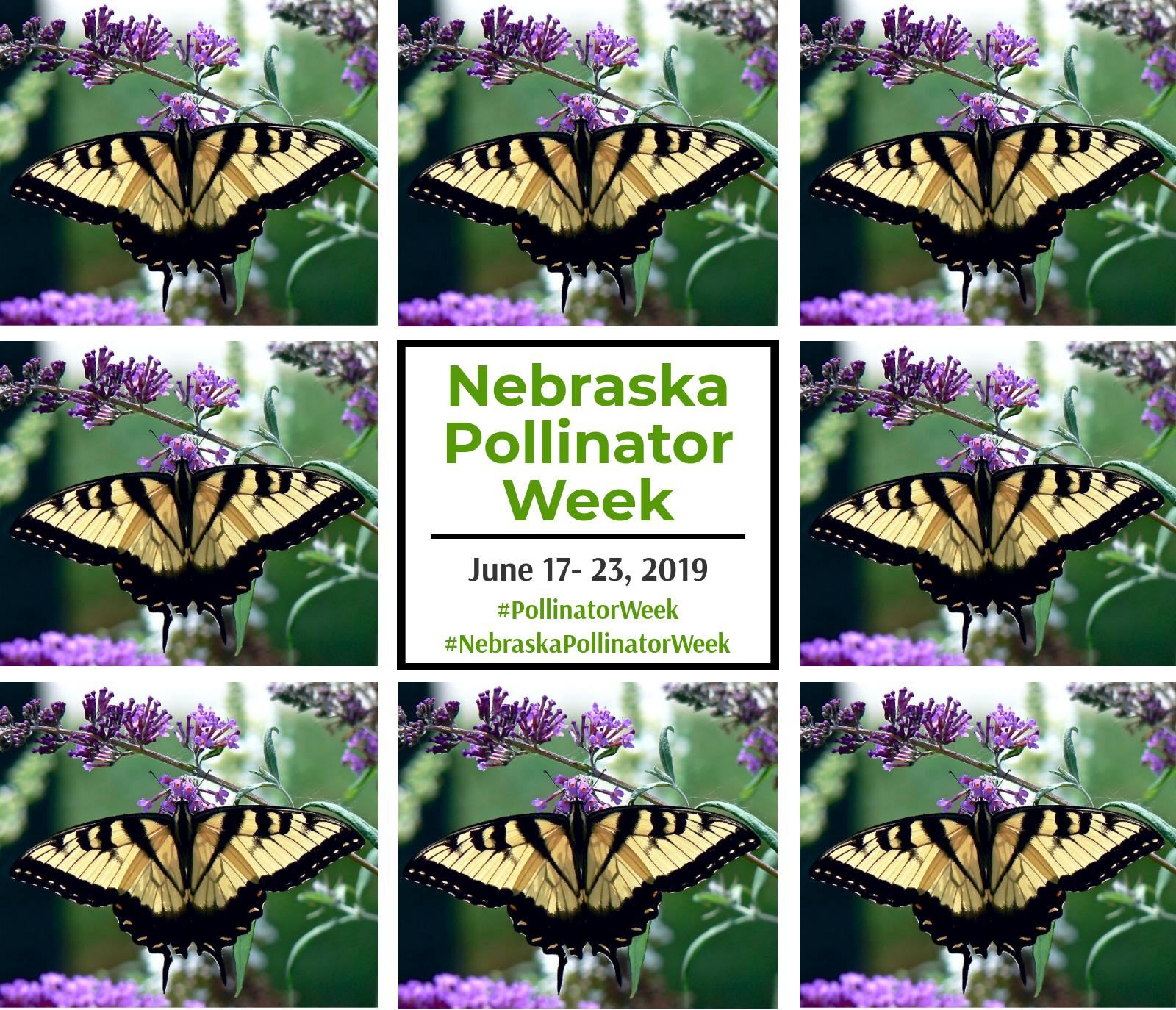 CE: Nebraska Pollinator Week 2019