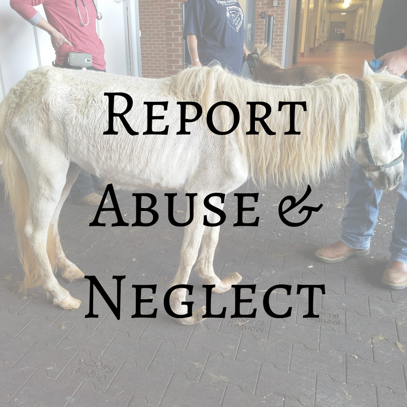 Report Livestock Abuse or Neglect