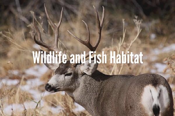 Wildlife and Fish Habitat